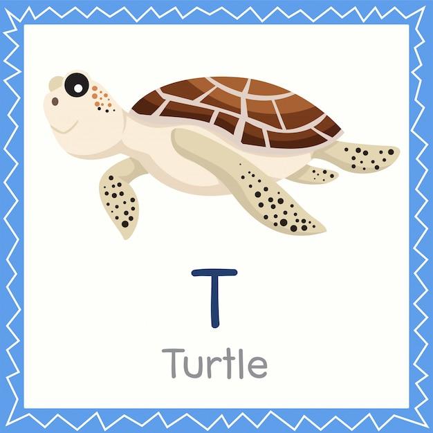 Ilustrador de t para animal da tartaruga