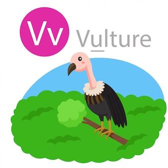 Ilustrador de v para animal abutre