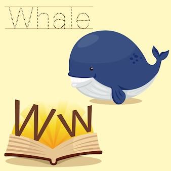 Ilustrador de w para vocabulário de baleia