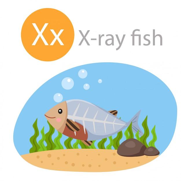 Ilustrador de x para animais de peixe de raio-x