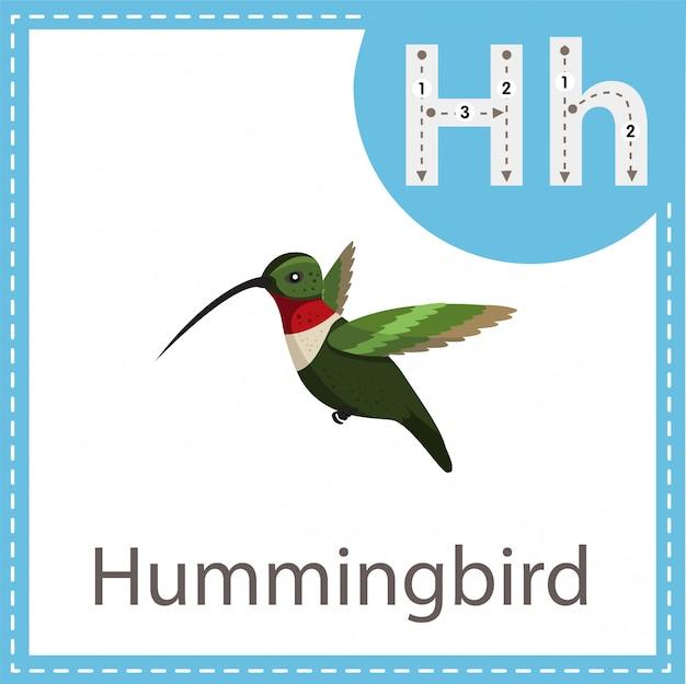 Ilustrador do colibri isolado