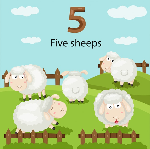 Ilustrador do número cinco ovelhas