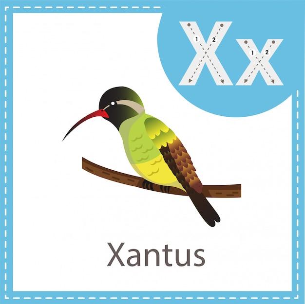Ilustrador do pássaro xantus