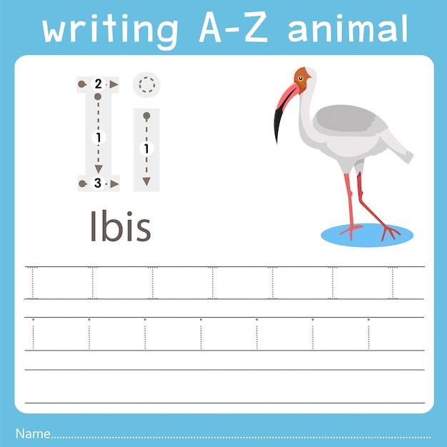 Ilustrador, escrita, az, animal, de, ibis