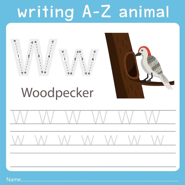 Ilustrador, escrita, az, animal, de, pica pau