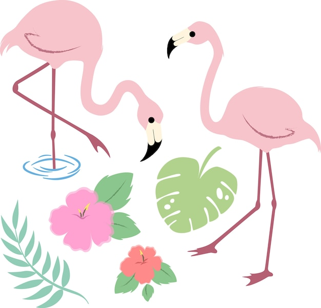 Imagem vetorial de flamingos tropicais