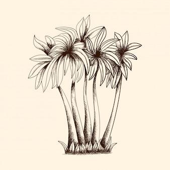 Imagem vetorial de palmeiras tropicais com densa coroa e grama.