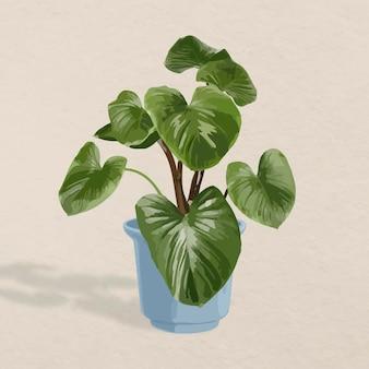 Imagem vetorial de planta, melanoneurônio filodendro decoração de interiores em vasos