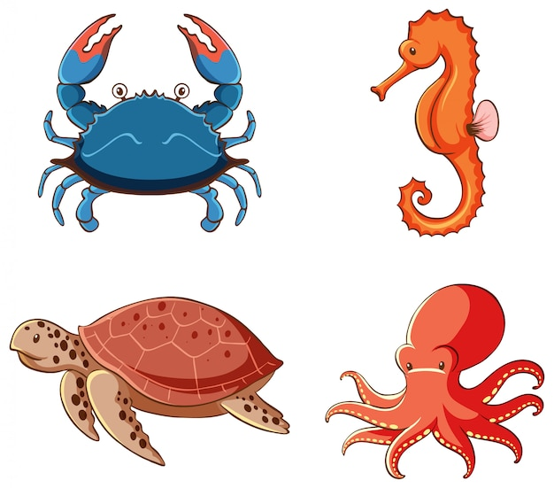 Imagens isoladas de animais marinhos