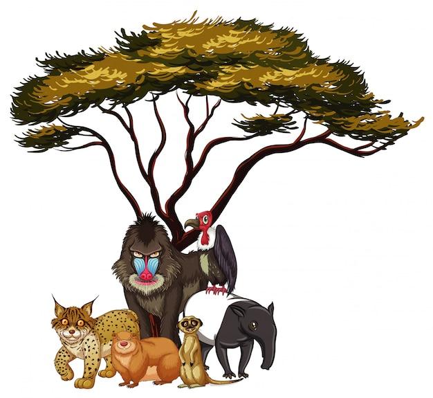 Imagens isoladas de animais selvagens debaixo da árvore