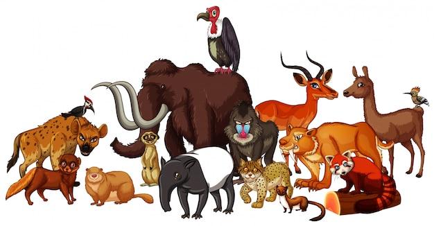 Imagens isoladas de animais selvagens