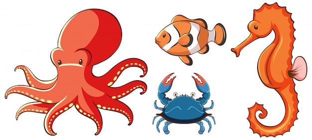 Imagens isoladas de criaturas do mar