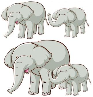 Imagens isoladas de elefante cinza