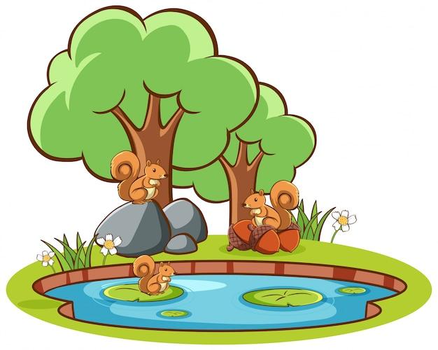 Imagens isoladas de esquilos à beira da lagoa