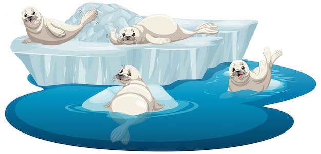 Imagens isoladas de focas brancas