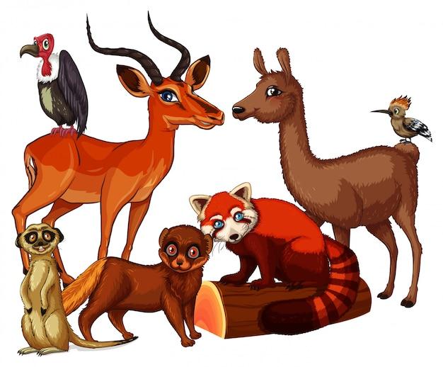 Imagens isoladas de muitos animais
