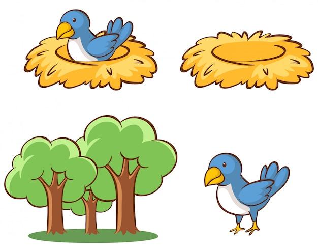 Imagens isoladas de pássaros e ninhos