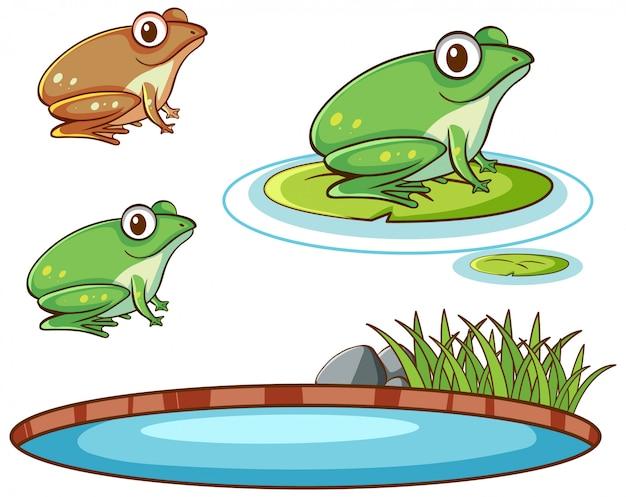 Imagens isoladas de sapos e lagoa