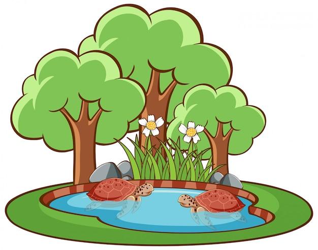 Imagens isoladas de tartarugas no pequeno lago