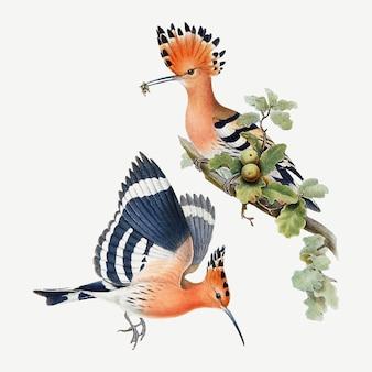 Impressão de arte animal de vetor de pássaro hoopoes, remixada de obras de arte de john gould, henry constantine richter e charles joseph hullmandel