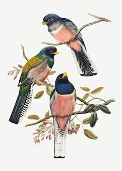 Impressão de arte animal vetorial de pássaro trogon, remixada de obras de arte de john gould e william matthew hart