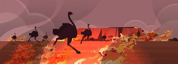 Incêndio florestal perigoso austrália incêndios florestais com silhueta de avestruzes animais selvagens arbusto fogo madeiras secas queimando árvores desastre natural conceito intenso laranja chamas ilustração vetorial horizontal