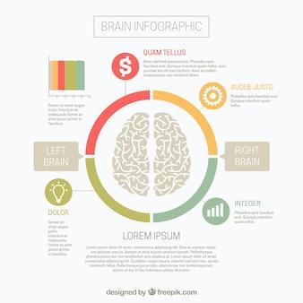 Infográfico cérebro com hemisférios direito e esquerdo