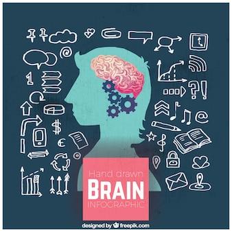 Infográfico cérebro humano desenhada à mão