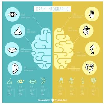Infográfico cérebro humano fantástico