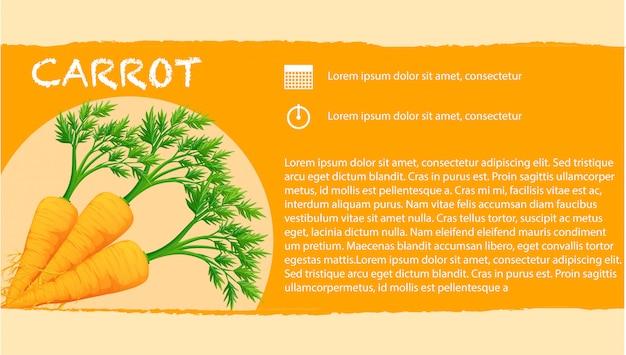 Infográfico com cenouras frescas