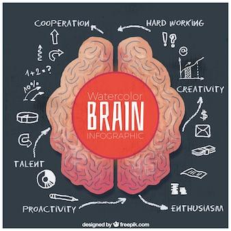 Infográfico da aguarela do cérebro humano