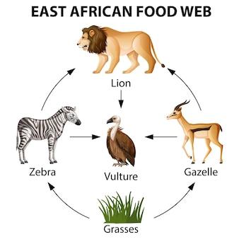 Infográfico da web alimentar da áfrica oriental