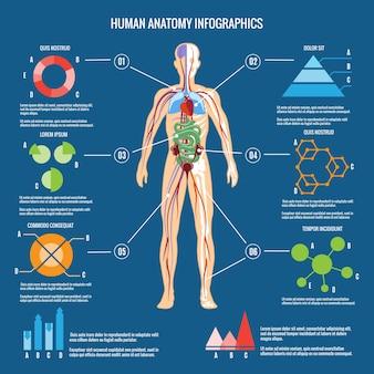 Infográfico de anatomia do corpo humano colorido sobre fundo verde azul.