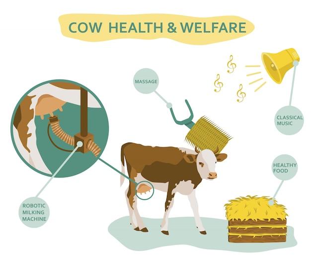 Infográfico de bem-estar de vaca