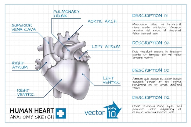 Infográfico de cardiologia médica