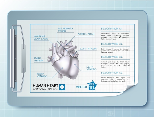 Infográfico de ciências médicas