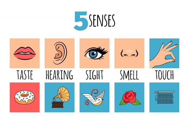 Infográfico de cinco sentidos