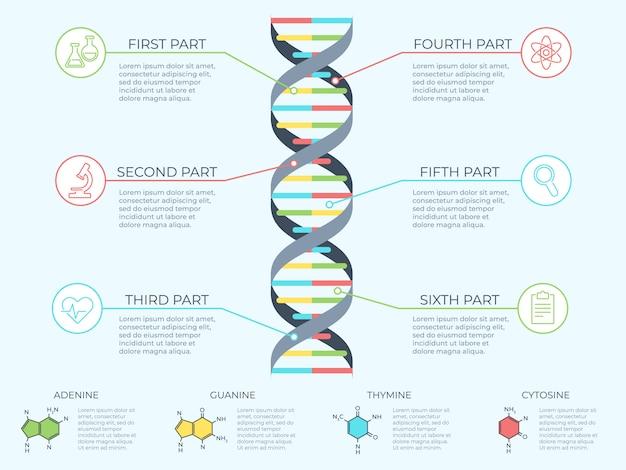 Infográfico de dna. espiral genética, diagrama de molécula de modelo genômico e ilustração de conceito de gráfico de estrutura de padrão de adn