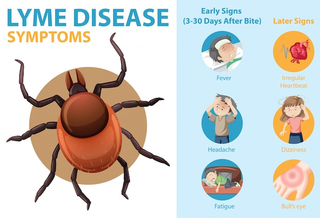 Infográfico de informações sobre os sintomas da doença de lyme