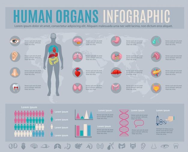 Infográfico de órgãos humanos com símbolos e gráficos de partes do corpo interno