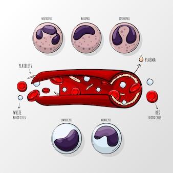 Infográfico de sangue desenhado à mão