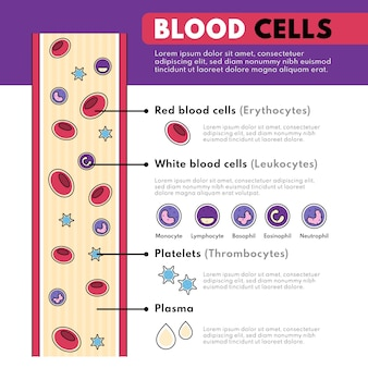 Infográfico de sangue linear
