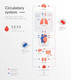 Infográfico de sistema circulatório de design plano