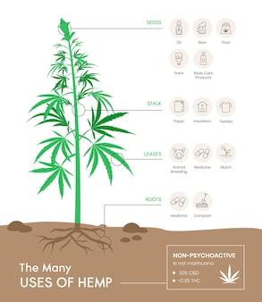 Infográfico de uso de cânhamo