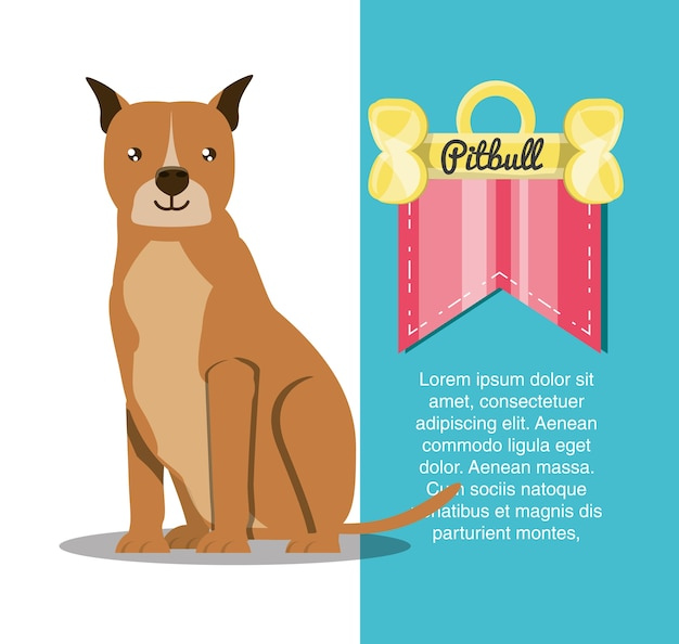 Infográfico design do cão pitbull