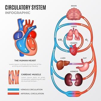 Infográfico do sistema circulatório de gradiente