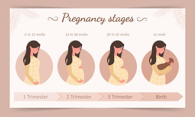 Infográfico dos estágios da gravidez. silhueta de uma jovem mulher grávida.