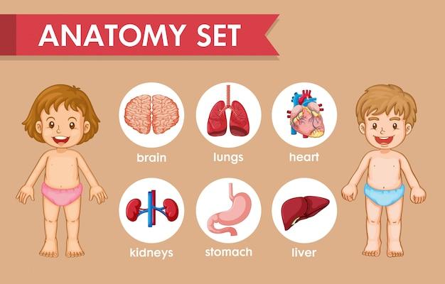 Infográfico médico científico da anatomia humana de crianças