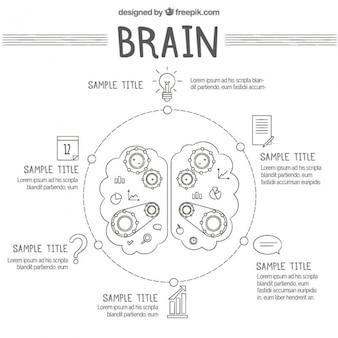 Infográfico rodada do cérebro humano com engrenagens