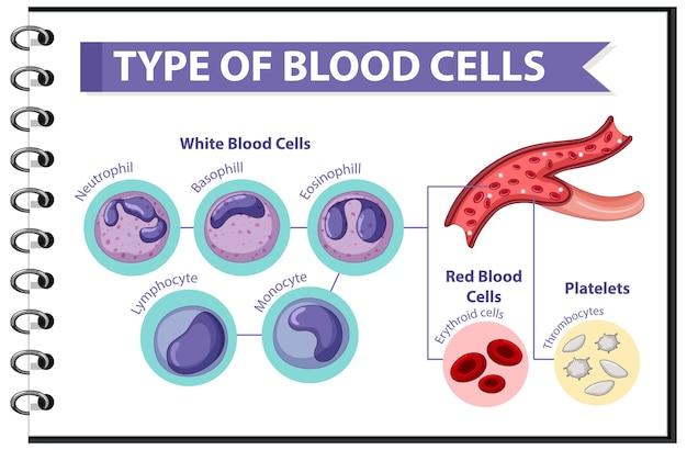Informações médicas sobre o tipo de células sanguíneas